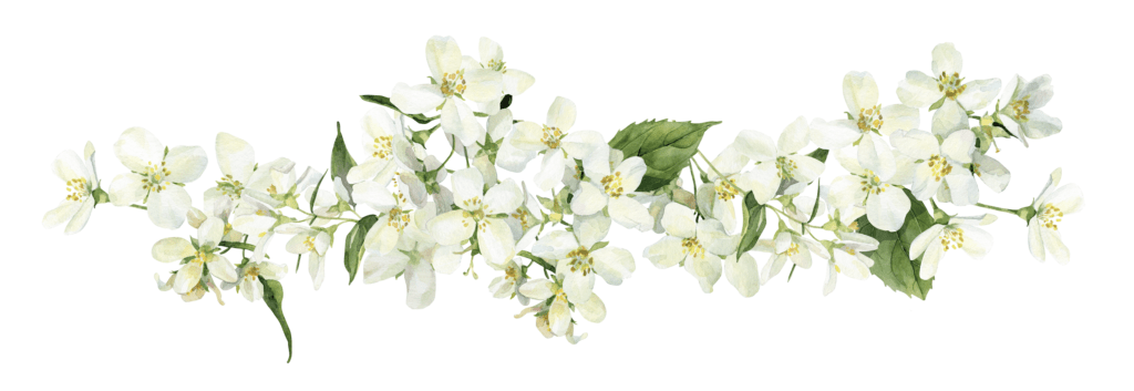 branch of Jasmine flowers