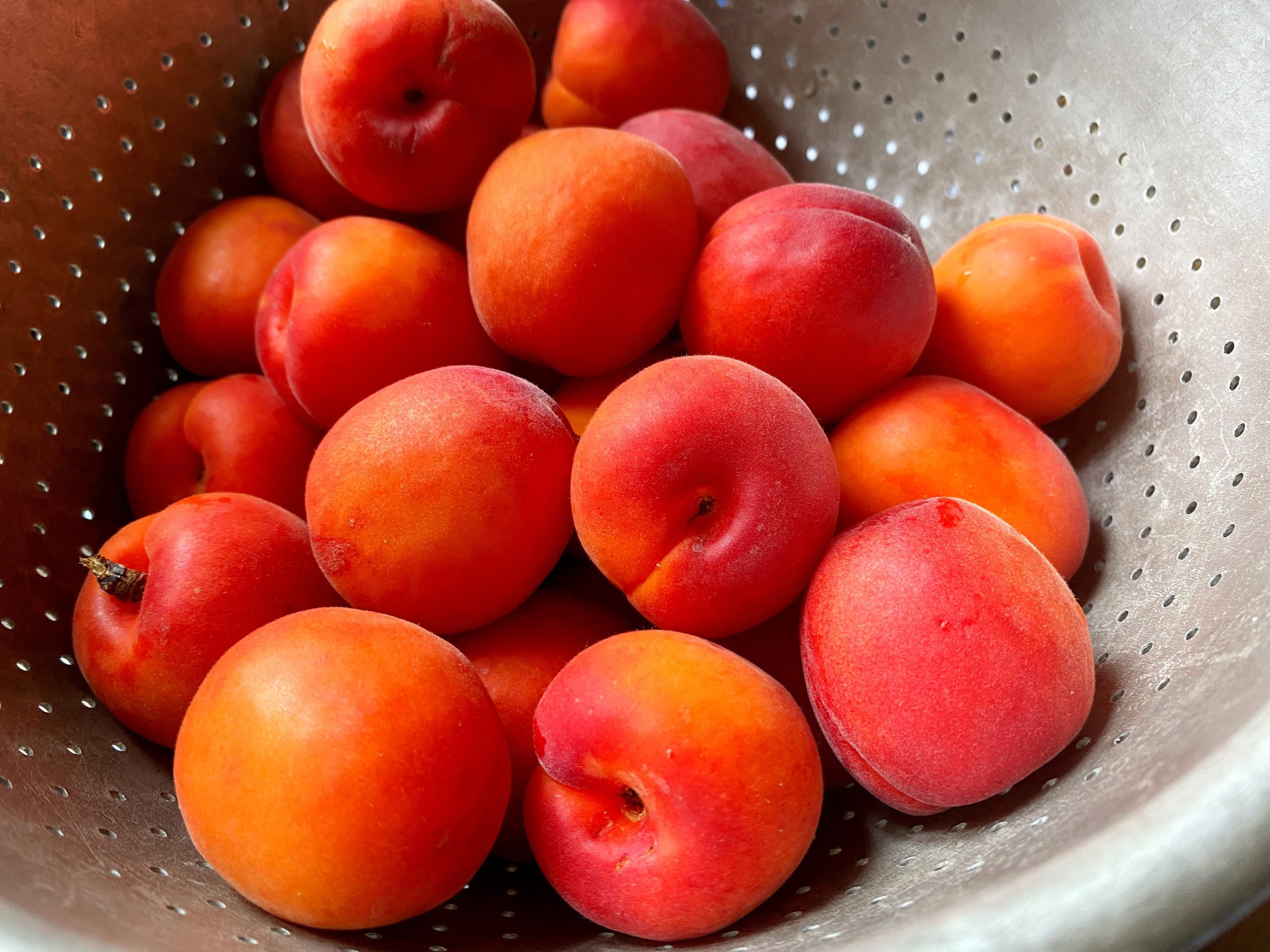 red apricots