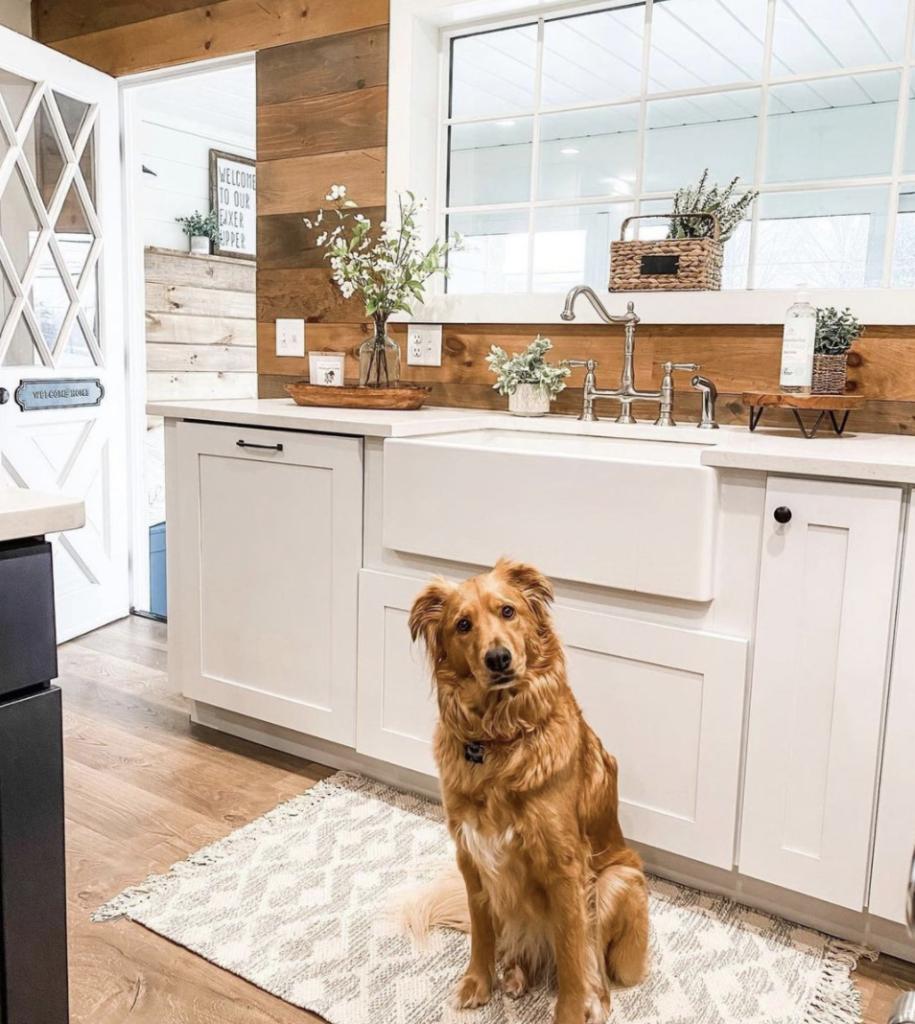 Dog in farmhouse kitchen