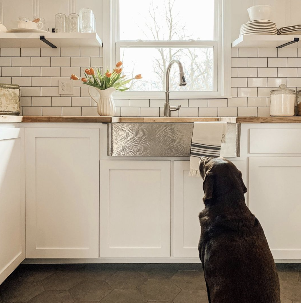 dog looking out window in kitchen