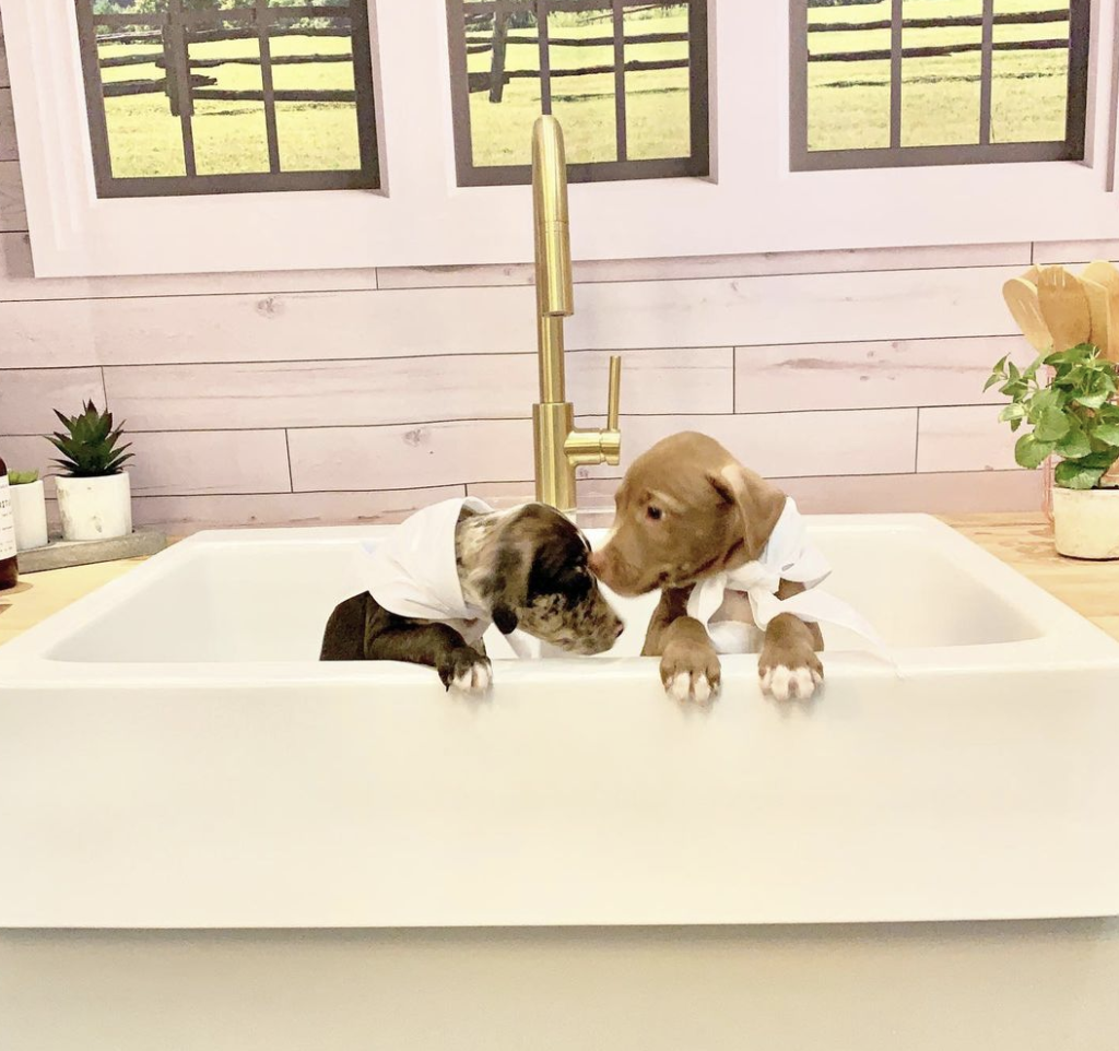 two puppies in a fireclay sink